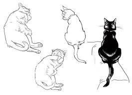sketchy cats