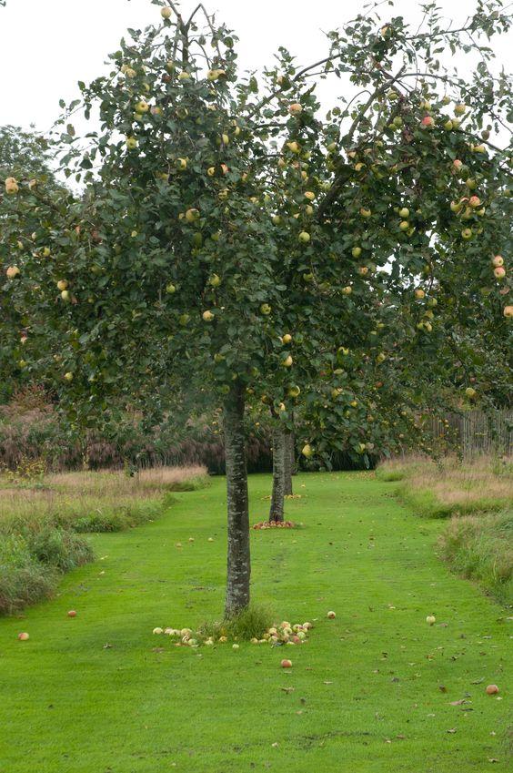Edible Landscaping: Orchard at Le Jardin Plume, Fruit in the Garden | jardin potager | bauerngarten | köksträdgård