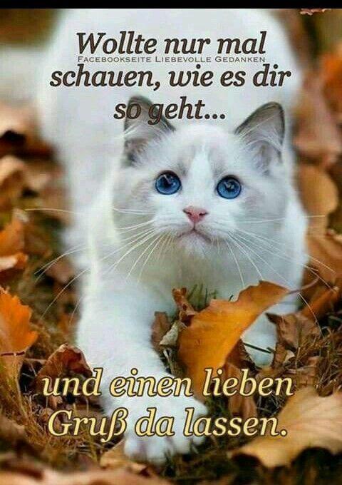 Gruss Liebe Grusse Bilder Katzen Bilder Grusse Spruche