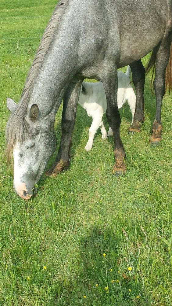 """Feel Good Sunday: """"Where the Wild Things Are: Shannon County's wild horses captivate locals, visitors"""" 