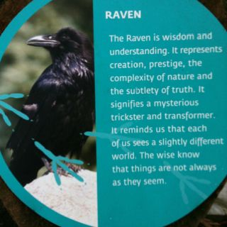 Raven symbolism for the Indian from West of Canada (raven ...