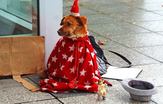 Nass ist es, kalt ist es,  ... der Nikolaus ist wieder nach Hause gefahren und in meinen Hut wirft auch niemand was. Wie soll da denn bitteschön Weihnachtsstimmung aufkommen?