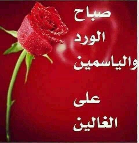 Pin By Kalaliz Kouider On صباح الخير Good Morning Beautiful Flowers Good Morning Beautiful Morning Images
