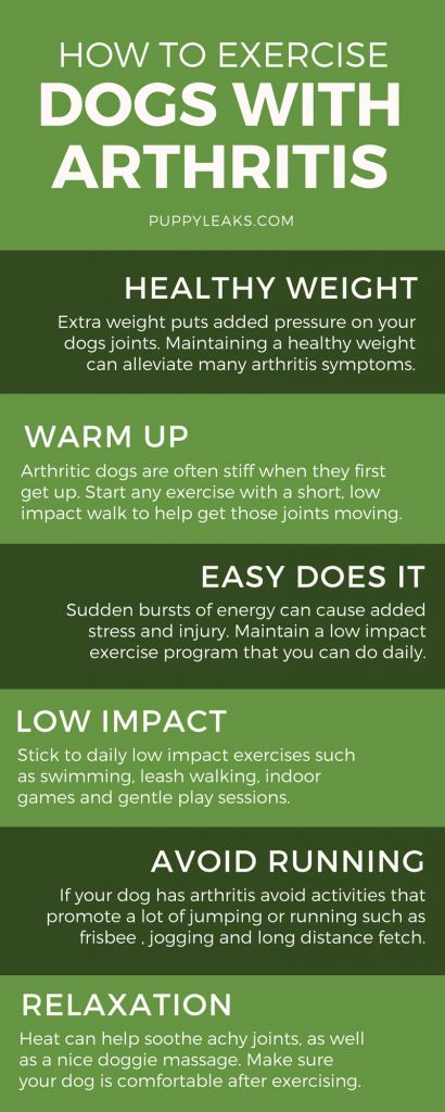 dog arthritis pain relief infographic