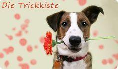 Stadthunde-Trickkiste | Hundesport | Trickdogging|Stadthunde.com Hunde-Community