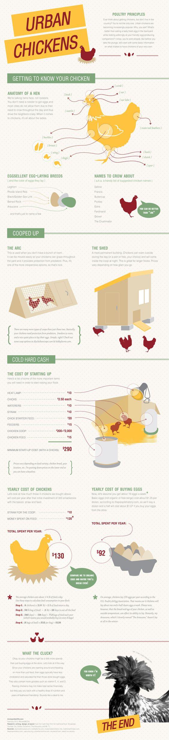 Raising chickens.