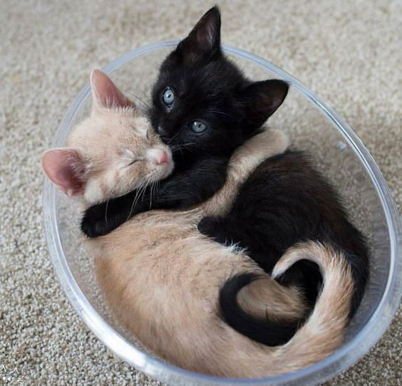 Two Cute Kitties Cuddling With Images Cute Cats