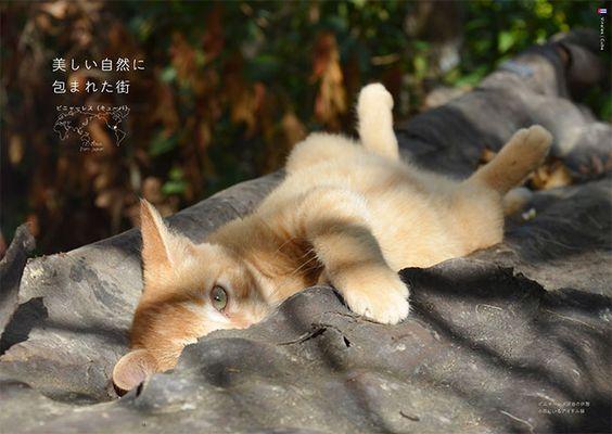<br>美しい自然に包まれた街。<br> ビニャーレス渓谷の休憩小屋にいるアイドル猫PROFILE 小林 希(こばやし・のぞみ) 1982年東京都出身。立教大学卒業。在学中から海外をバックパッカーとして旅をする。2005年サイバーエージェント入社。アメーバブックス新社で多くの書籍を編集した後、2011年末に退社、その日の夜から旅に出る。1年後帰国して、その旅を綴(つづ)った『恋する旅女、世界をゆく―29歳、会社を辞めて旅に出た』(幻冬舎刊)でデビュー。現在も旅をしながら執筆活動をする。 BOOK 世界の美しい街の美しいネコ 世界の美しい街の美しいネコ (エクスナレッジ)小林 希著・写真 猫がいるだけで、どうしても私にはその街が穏やかで、優しさに満ちているような気がしてしまう。だから、また私は猫に会いたくて旅にでてしまうのだろう(あとがきより)。そんな旅人とネコの54の物語。見ているだけでネコと街に心癒やされます。