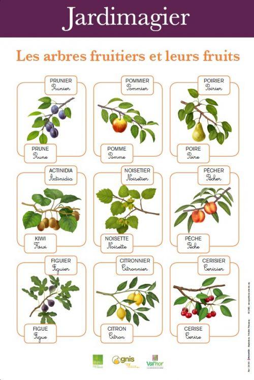 Jardimagier Les Arbres Fruitiers Et Leurs Fruits Arbre Fruitier Fruitier Jardinons A L Ecole