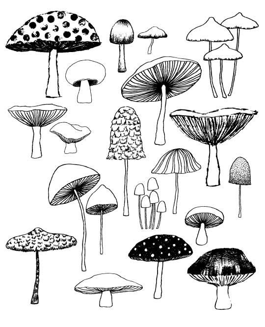 « Champignons » sont une estampe tirée directement de lun des pages de mon livre, « Vingt façons pour dessiner un arbre ». Cette impression est une