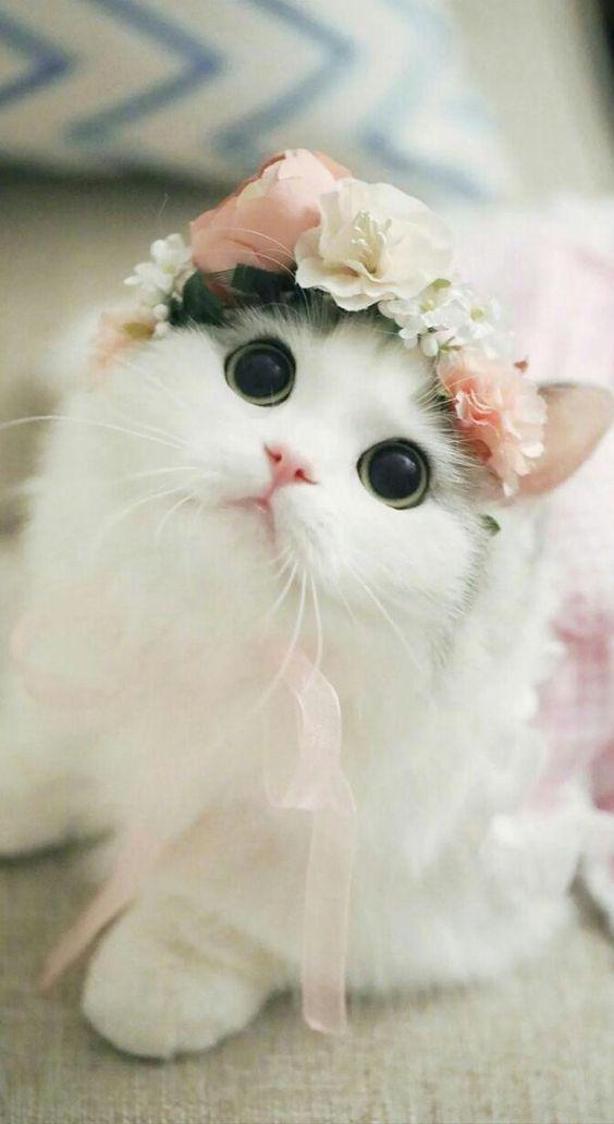 Ay que hermosa gatita