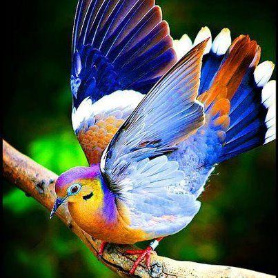 Colourful bird! || #nature #colour #bright