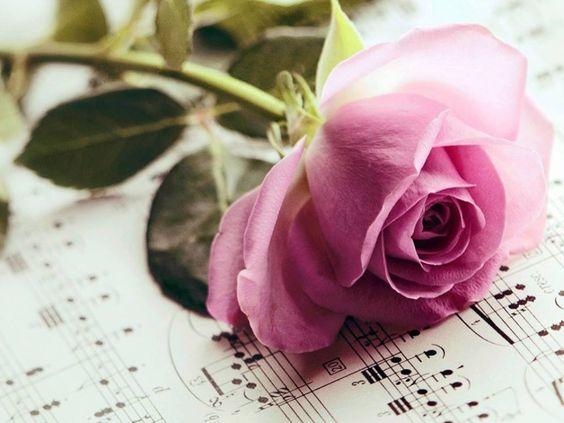 """Quando você descobrir o quanto a vida é linda em sua leveza de alma... Entenderá que tudo, nada mais é, que um milagre. E quando a gente se descobre, voa feito pássaro livre sobre flores ou espinhos, sobre brasas ou gramíneas. E o fim de toda lágrima é dentro do coração sorrindo."""" 2015/09/21."""