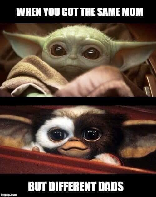 Same Mom Different Dadhttps I Redd It Mvu3o8idwi141 Jpg Yoda Funny Yoda Meme Star Wars Humor