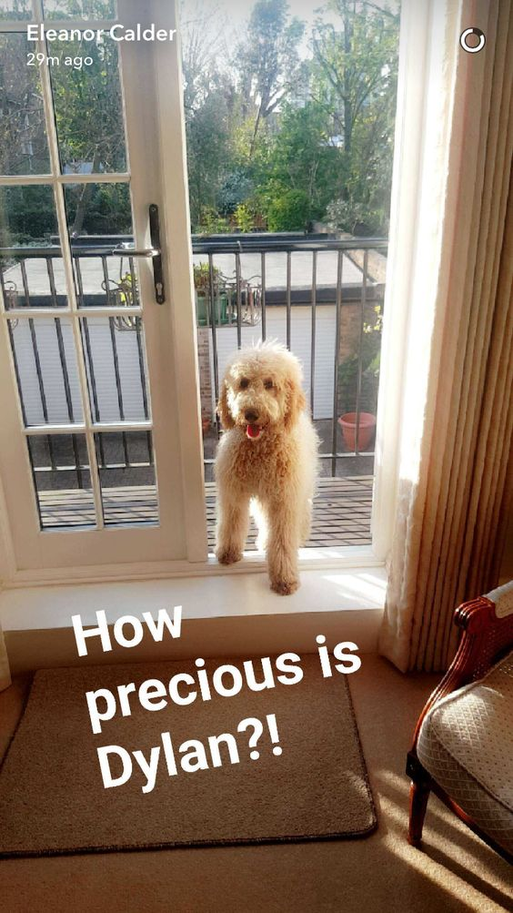 On Eleanor's Snapchat
