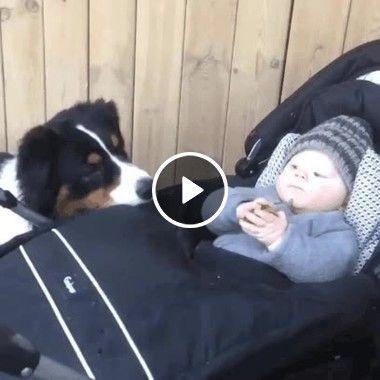 Cachorro da pata para bebê incrível.