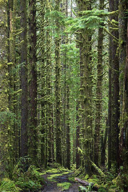 Olympic National Park, Washington State, USA.