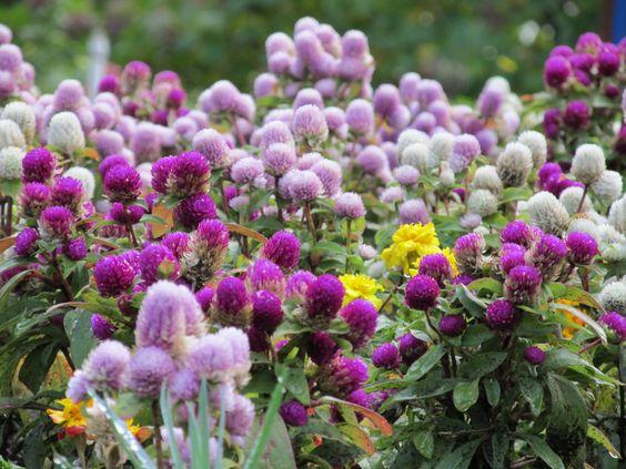 As flores deixam esse mundo muito mais lindo!!
