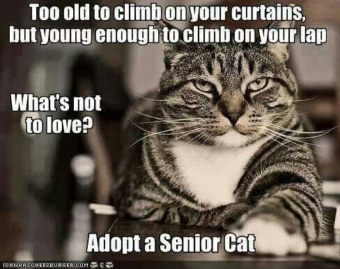 Too old to climb on your curtains, but young enough to climb on your lap. What's not to love? Adopt a Senior Cat.: