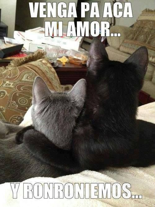 memes chistosos de gatos , Google Search
