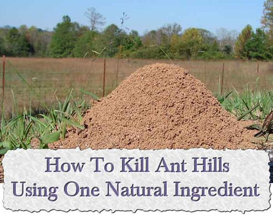 How To Kill Ant Hills Using One Natural Ingredient Ant Hills In Your Garden Are Not A Problem In