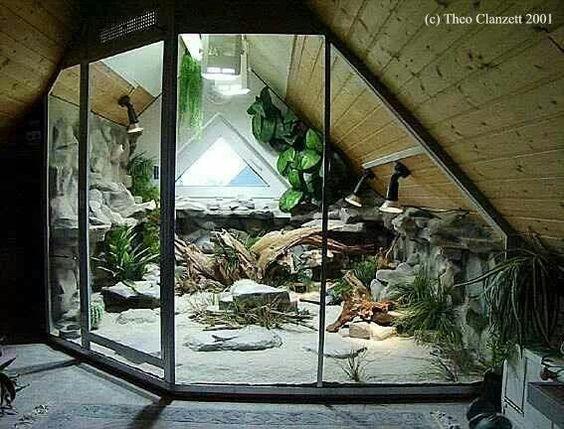 My Dream Terrarium Animal Reptile Room Pinterest