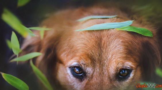 Lindos olhos de um cão na foto