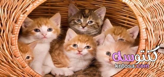 اسماء قطط اناث ومعانيها Cats Animals