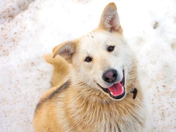 Conseils pour prendre soin de Pitou et Minou en hiver #animauxdecompagnie