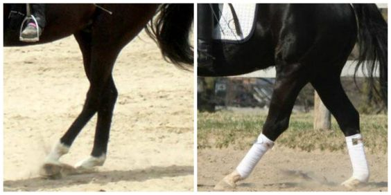 Impulsion: How Two Easy Strides of Energy Might Solve Your Horse Riding Problem