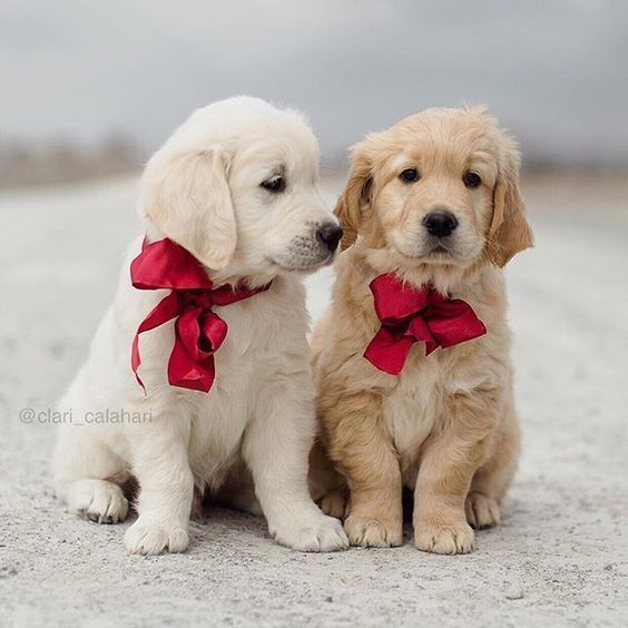 42 Of The Cutest Christmas Puppies Cute Animals Cute Puppies