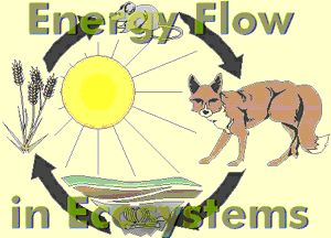 Printables Energy Flow In Ecosystems Worksheet activities other and food chains on pinterest energy flow in ecosystems board httpwww com
