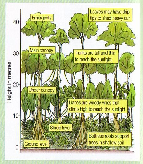 Layers of the rainforest onlinegeography lw for Soil facts ks2