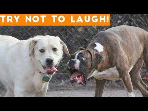 Welcome To Munchkin Land Funny Dog Videos Funny Animal Videos