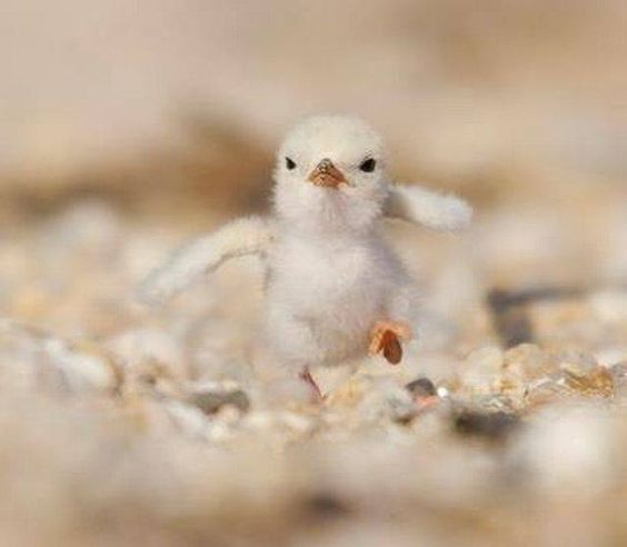 Bravely baby bird :)   From: https://www.facebook.com/bilionpeople