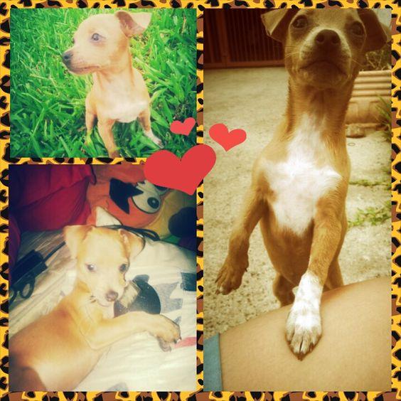 Minha Valdirene Lokinha que amo demais!!! I love pets!!!