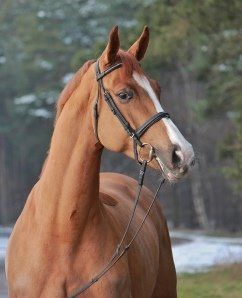 Lewitz Stud | Horses for sale | Contact