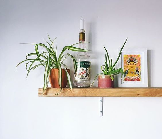 The other half of our #plantshelf it took all my restraint to keep it this minimalist The poor spider plant is struggling in this heat and the aloe was grown from a small cutting so despite being bedraggled Im pretty pleased with how big its getting.