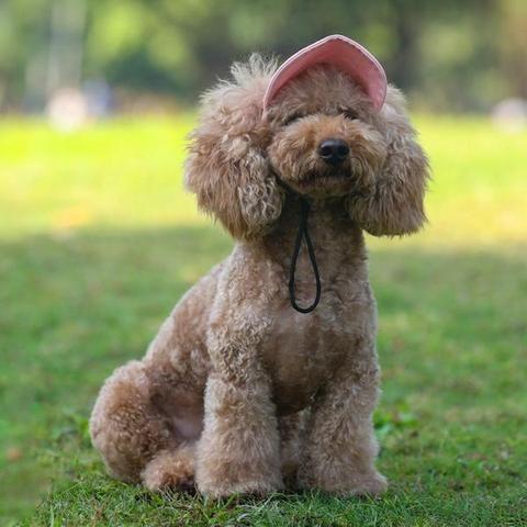 Dog Sun Hat Size S Xl Elitehomeimage Sun Dogs Dog Hat Pets