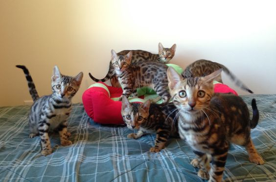 From left to right: Queen Elsa, Prince Kristoff, Princess Snowflake, Prince Olaf, Princess Anna, and Prince Sven. =^..^=