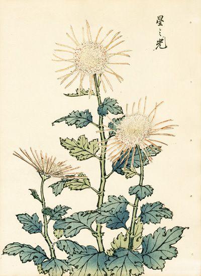 Keika Chrysanthemum Wood Block Prints