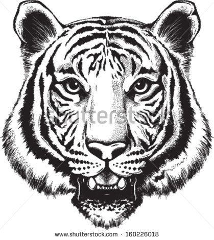 Black and white vector sketch of a tiger's face - stock ...
