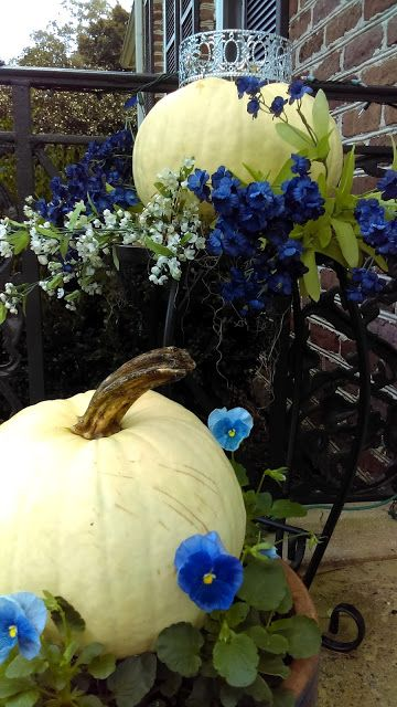 Italian Girl in Georgia: White Pumpkins & Blue Pansies Mingle ~ Original Photograph by Suzanne MacCrone Rogers