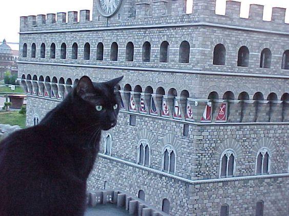 Giotto è in perlustrazione a #PalazzoVecchio, #Firenze