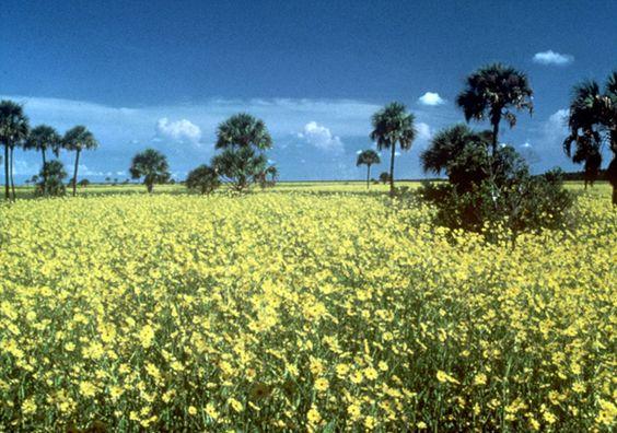 Paynes Praire State Park: 12,000 acres of subtle beauty