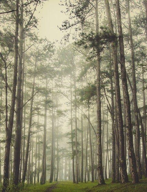 Terbaru 30 Foto Pemandangan Hutan Hd Pemandangan Hutan Pinus Foto Gratis Di Pixabay Download Us 8 85 41 Off Be Di 2020 Pemandangan Latar Belakang Fotografi Udara