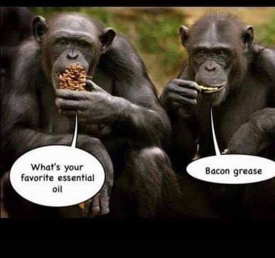 Best Funny Memes On The Internet Real Funny Jokes Monkeys Funny Funny Cartoon Quotes
