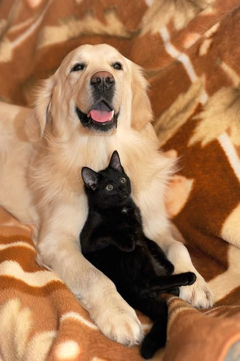Pin By Andrea Mueller Koch On Katzen Cute Cats And Dogs Cat Vs Dog Dogs