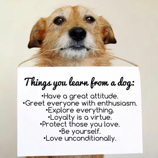 Things you learn from a dog.