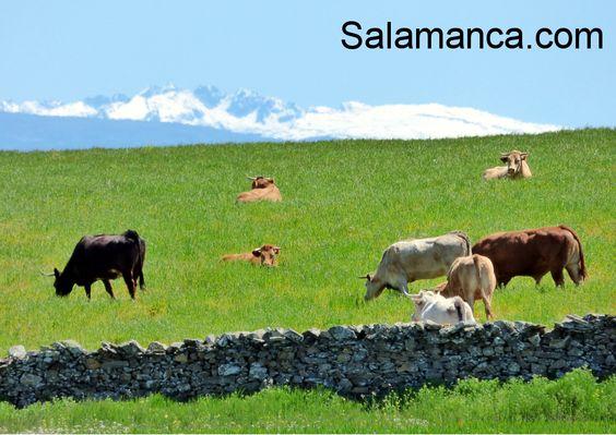 Por el campo de #Salamanca.